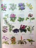 indoor garden houseplant complete companion by cynthia wickham book