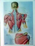 atlas of musculoskeletal exposures by hf moseley vintage medical book