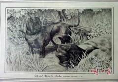 victor g becker 1935 get im dachshunds hunting dog vintage print