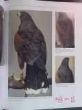 birds of prey floyd scholz hawk falcon kestrel osprey eagle photo book