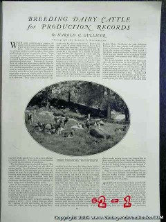breeding dairy cattle production record 1922 gulliver vintage article