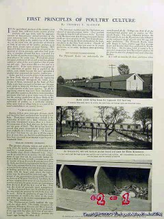 first principles of poultry 1906 chicken farm magazine vintage article