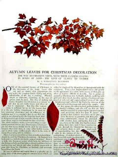 autumn leaves for christmas decoration 1906 vintage article