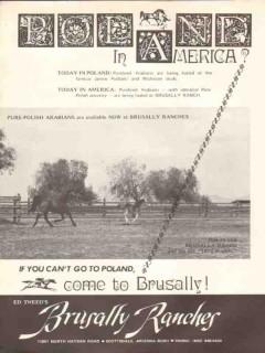 brusally ranches 1972 ed tweed poland america arabian horse vintage ad
