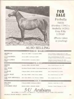 5-u arabians 1972 ferbella ferdine anabella equestrian vintage ad