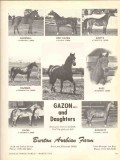 burton arabian farm 1972 gazon daughters gazonell gazita vintage ad
