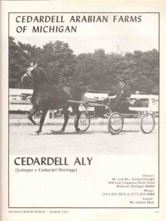 cedardell arabian farms michigan 1972 aly juleppa horse vintage ad