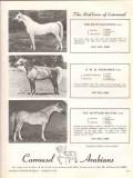 carrousel arabians 1972 egyptian prince bmb rahdames horse vintage ad