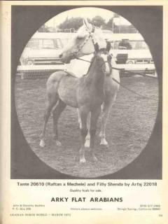 arky flat arabians 1972 tante raftan mechele filly shenda vintage ad