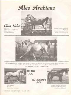ales arabians 1972 char kebir mahrouss fad roufa horse vintage ad