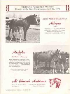 ali sharah arabians 1972 allegra abu farwa misheba horse vintage ad