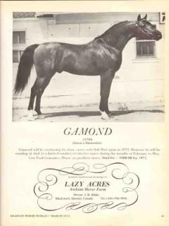 lazy acres arabian horse farm 1972 gamond gazon diamondita vintage ad