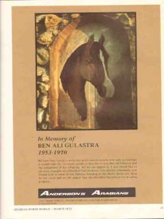 andersons arabians 1972 in memory ben ali gulastra horse vintage ad
