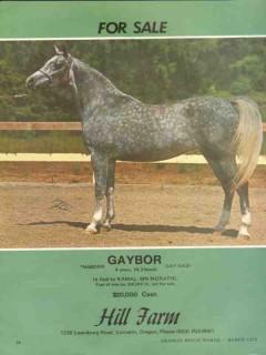 hill farm 1972 gaybor naborr gay gazi arabian horse stud vintage ad
