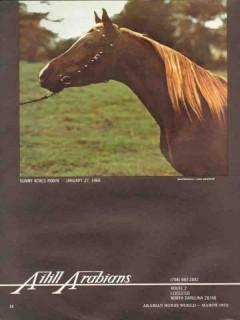 aihill arabians 1972 sunny acres robin equestrian stud vintage ad