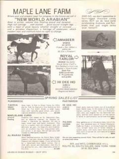 maple lane farm 1972 amseer royal tarlor hi dee ho horse vintage ad