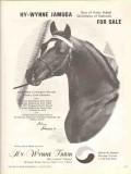 hy-wynne farm 1972 jamuga amir ashal naharin arabian horse vintage ad