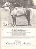 carrousel arabians 1972 bmb rahdames stud equestrian horse vintage ad