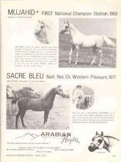 arabian heights 1972 mujahid sureyn sacre bleu equestrian vintage ad