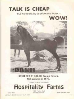 hospitality farms 1972 exelsjor talk arabian horse stud vintage ad