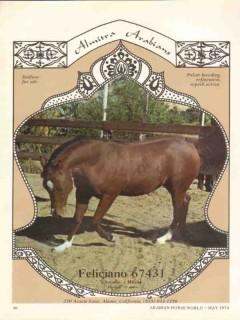 almitra arabians 1972 feliciano amadeo mirsu stud horse vintage ad