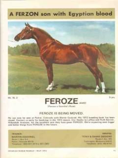 hillandale arabians 1972 feroze ferzon gamilas rose horse vintage ad