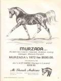 ali sharah arabians 1972 murzada melanie kendall stud horse vintage ad
