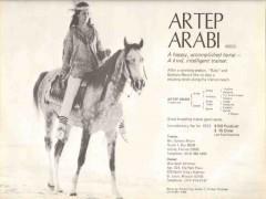 barbara moore 1972 artep arabi trainer arabian horse stud vintage ad
