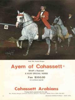cohassett arabians 1972 ayem rifraff rumnani morgan horse vintage ad