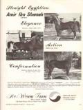hy-wynne farm 1972 amir ibn shamah egyptian arabian horse vintage ad