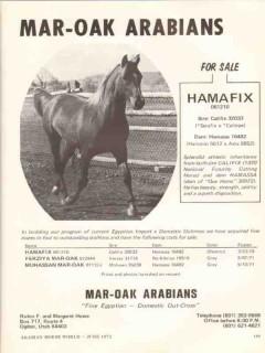 mar-oak arabians 1972 hamafix ferziya muhassan stud horse vintage ad
