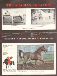 arabian equation 1972 shahloul nazeer moniet el nefous stud vintage ad