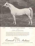carrousel arabians 1972 egyptian prince stud equestrian vintage ad