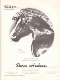 buras arabians 1972 champion wineyn kaneyn candee horse vintage ad