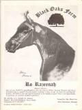 black oaks farm 1972 ro razeenah raseyn arabian horse stud vintage ad