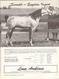 lowe arabians 1972 saroukh egyptian import equestrian horse vintage ad