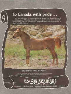 bo-gin arabians 1972 talari talal asil phairy canada pride vintage ad
